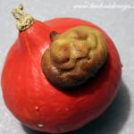 Dyniowe ciasteczka – Halloween