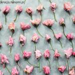 Shio zakura – marynowane kwiaty wiśni