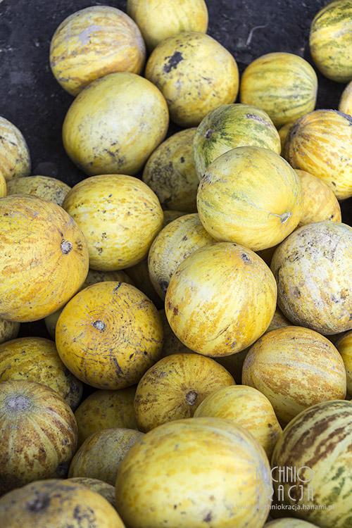 Melony, Fot. Hanami