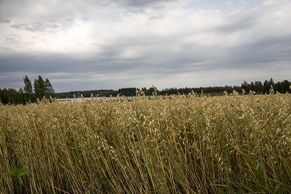 Finlandia, Fot. Hanami